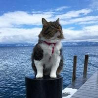 とってもモフモフ ハスキー犬に育てられた猫が立派な姿に