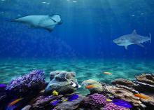 一眼レフを超える日…スマホカメラで「水深100mの世界」へ旅立とう