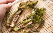 苦味が胃腸に効く!? 糖尿病予防にも!? 40男が春に山菜を食すべき理由