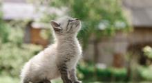 猫背は万病のもと?! 猫背を治す簡単ストレッチで心も体も健康に