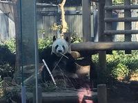 上野動物園が開園135周年記念で無料開園 パンダやアイアイやハシビロコウに会える