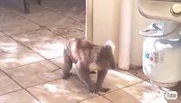 ワンコと出会ったコアラさん、2匹の間に芽生えた友情にほっこり