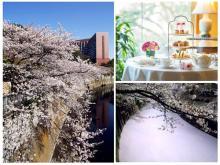 美しい風情や喜ばしい春のシーンを感じさせる桜色の作品募集「SAKURAフォトキャンペーン」