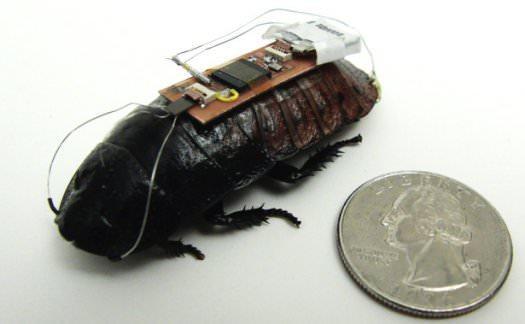 サイボーグゴキブリをより素早く動かすには?―災害現場でのマップ作成支援技術が明らかに