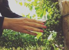 金賞に選ばれた王室ワイン オーナー会員を限定募集