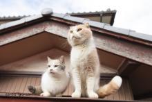 飛び猫、日本全国を飛ぶ! ― ネコ写真家 五十嵐健太さんの 「春の飛び猫写真展 全国巡回」スタート