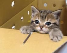 【動画】今日からよろしくね♪ 生後2か月の子猫ちゃんが我が家へやってきた!?