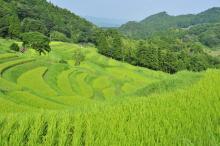 日本の原風景「棚田」オーナー制度とは?