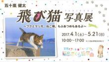 【ねこ画像いっぱい】『飛び猫』カメラマン五十嵐健太の全国巡回写真展! 最新刊『もふあつめ』から選りすぐりカットも展示!
