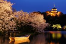 夜の花見は「三溪園」もイイネ!―無料Wi-Fiもあるし