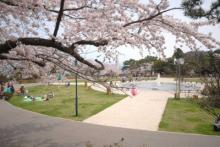 日本最古の観覧車に配水池も! 函館の絶対行きたい桜名所3選