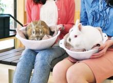 もふもふウサギや乳搾りも!淡路島の動物ふれあいスポットおすすめ6選