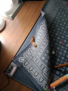 「それで隠れたつもりか」 猫のバレバレすぎるカモフラージュ