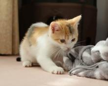 【動画】ヒモをみたら黙ってられニャい…!小さな猫パンチで必死に戦う子猫