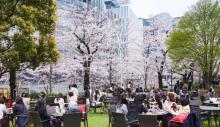 東京で桜を満喫! 春を味わう期間限定イベント3つ