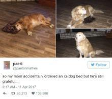 間違って注文した小さ過ぎる犬用ベットを使う大型犬が愛おしい・・・