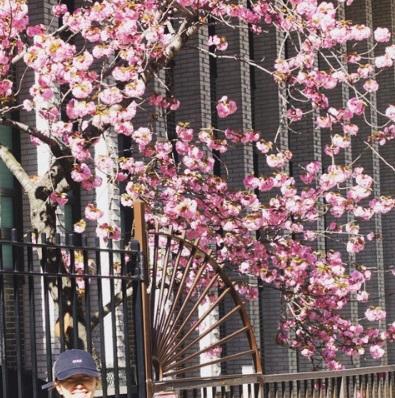 里田まい NY生活中に見つけた桜?の写真公開「多分」