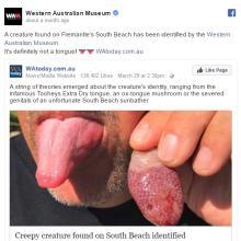 オーストラリアで人間の舌そっくりの生き物を発見!