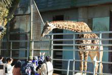 ライオンが脱走デマで被害を受けた熊本市動植物園が大地震を乗り越え開園「動物園は笑顔が生まれる場所なんですね!」