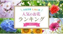 「人気のお花ランキング」 やっぱりトップはあの花!