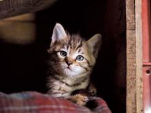 津軽の四季とともに、子ネコたちが育つ成長物語!「ふるさとのねこ」の写真展
