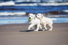 犬社会に溶け込めない犬が増加でパピーパーティーが人気
