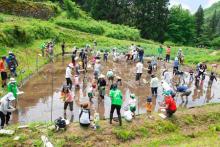 田んぼアート&田植えに挑戦 参加すると収穫したお米が贈られるゾ!