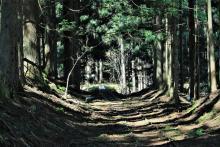 関西唯一の広大な「原生林」が残る芦生研究林を歩く