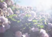 蜷川実花が父・幸雄の「死に向き合う日々」を撮影した写真展