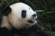 「パンダがいるぞ!」男性から残念オンナ認定されちゃうNGメイクとは?