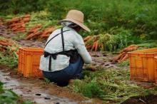 農業法人、10年で倍増 「若い農業者の受け皿に」