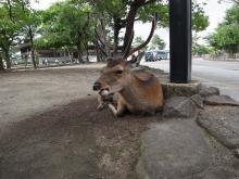鹿だらけのマストドン「鹿トドン」管理人に、地域特化型インスタンスの可能性を聞く