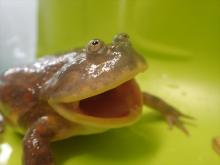 普段は見られない餌やりも!サンシャイン「カエルの日」記念イベント