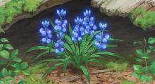 魔女の花に似た「サマームスカリ」さんを育成。毎日9時間観察生中継