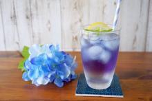 紫陽花のような美しさ!青いハーブティーで今の季節にピッタリなドリンクを作ってみた