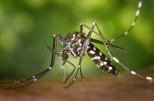 虫刺されの予防と対応 法米皮膚科学会がウェブで解説