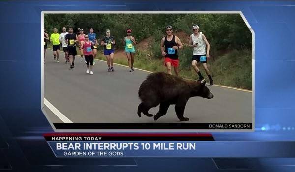 米国のマラソン大会でランナーたちの前をクマが横切るハプニングが発生!