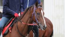 「リアルダービースタリオン」即戦力となる2歳馬「オリミツキネン15」の定点放送を開始