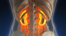 腎臓が弱ると体臭はアンモニア臭くなる?