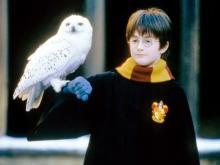『ハリー・ポッター』原作者、誕生20周年をお祝い