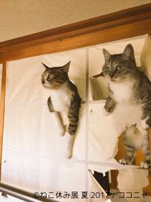 SNSフォロワー数200万人超え!人気の猫クリエイターたちの新作が続々集結