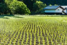 城島「根張りが弱い」鉄腕ダッシュで見せたTOKIOの米作りが相変わらずガチすぎると話題