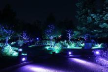 1500株のあじさいが咲くロッジ舞洲で限定イルミイベント開催!