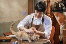 西島秀俊、ネコ7匹と共演中!「ネコちゃんで苦労した覚えあまりない」