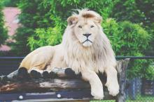 【心理テスト】動物園にいる動物、なるとしたら? 答えでわかる、あなたにぴったりの働き方