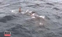 ゾウが沖合に流され・・・12時間に及ぶ救出劇【映像】