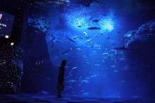 新江ノ島水族館NWA2017がロマンチックで「興味ない人でも好きになっちゃう」レベル