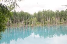 青い池への前線基地! 美瑛色いっぱいのカフェ「小麦畑と青い池」