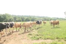 放牧が育む自然の味わい! 美瑛の牧場で味わう牛乳&ソフトクリーム