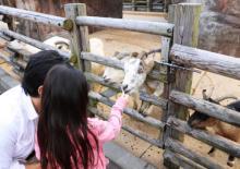 夏限定の夜間開放イベントも!上野動物園内の「子ども動物園」がリニューアル
